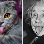 Einstein Kedi
