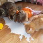 çocuk kedi