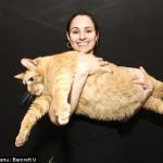 16 kiloluk kedi