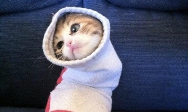 çorapta kedi