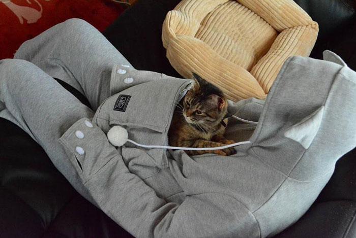 kedi kıyafeti