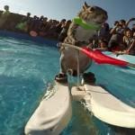 Su kayağı yapan sincap