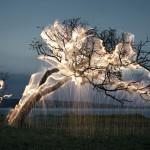 ağaç ışık