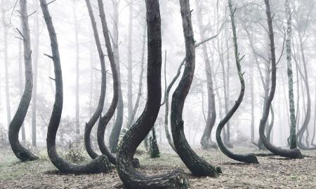 eğimli ağaçlar