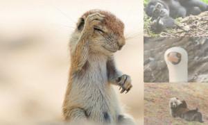 komik hayvanların foto