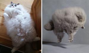 pofiş kediler ana görsel