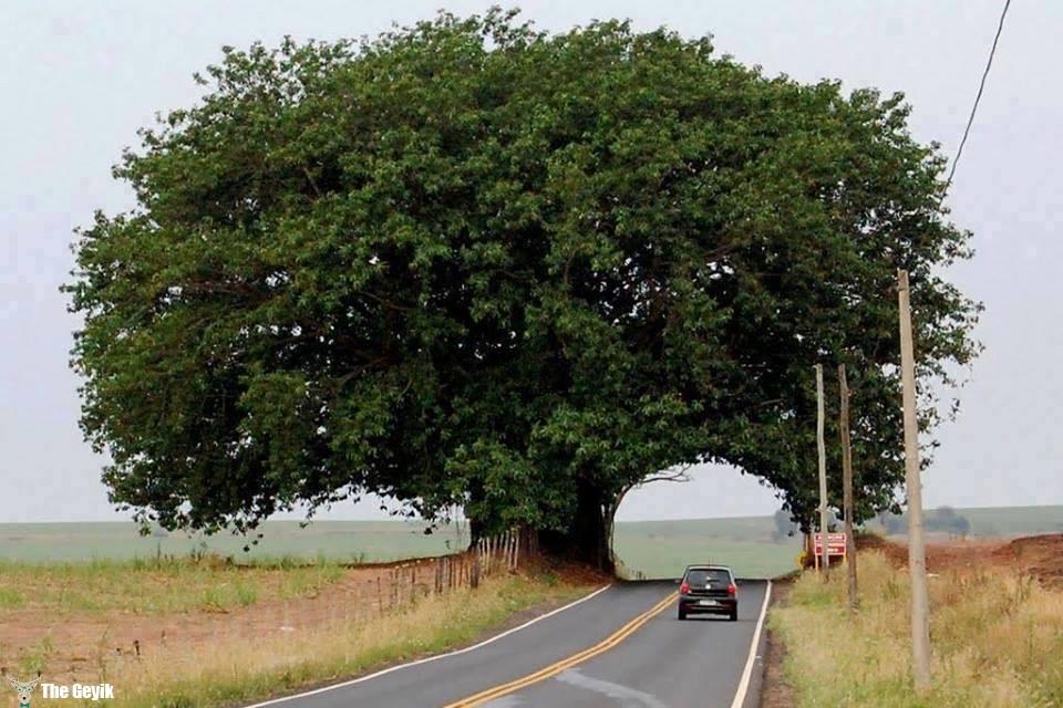 ağaç ve yol